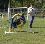 K9Kapers Dog Training