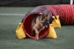 Lindhunde Dog Training